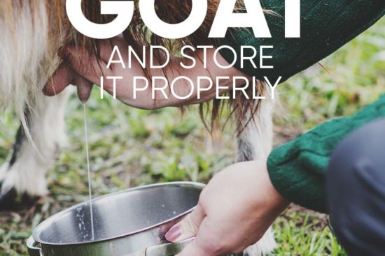 How to Milk a Goat in 10 Easy Steps (and How to Properly Store the Milk)