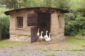 Duck Houses Runs Plans on duck coops, duck house, duck pond ideas, backyard chicken coop plans, deer run plans, duck housing needs, duck pens, rabbit run plans, dog run plans, duck tractor, pvc hunting blind plans, poultry run plans, duck spec, pheasant pen plans, chicken house plans, duck hatchery, goose shelter plans, duck shelters, duck housing ideas,