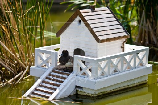 duck house plans