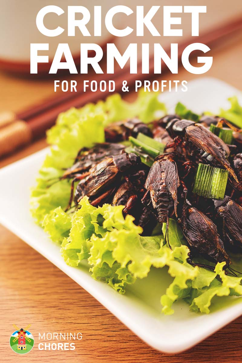 Cricket Farming 7 Effortless Steps To Raise Crickets For Profit Food