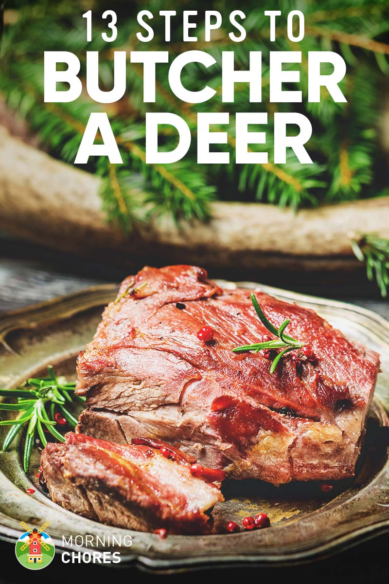 13 Easy Steps on How to Butcher a Deer and Get the Perfect