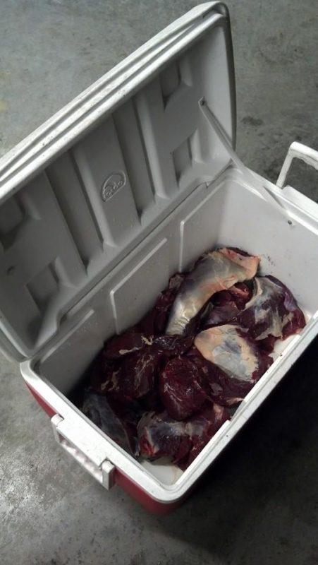 butcher a deer