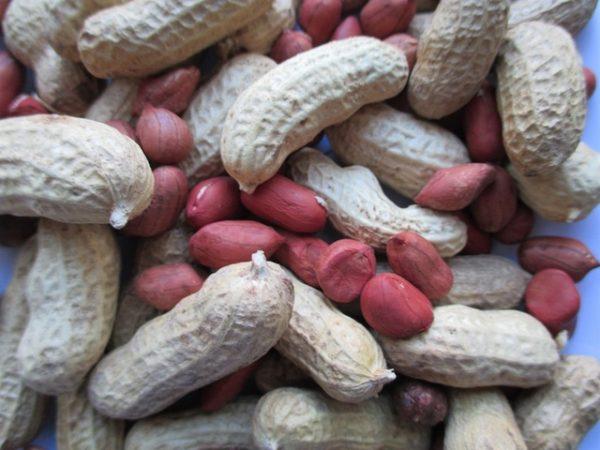 valencia peanut - growing peanuts