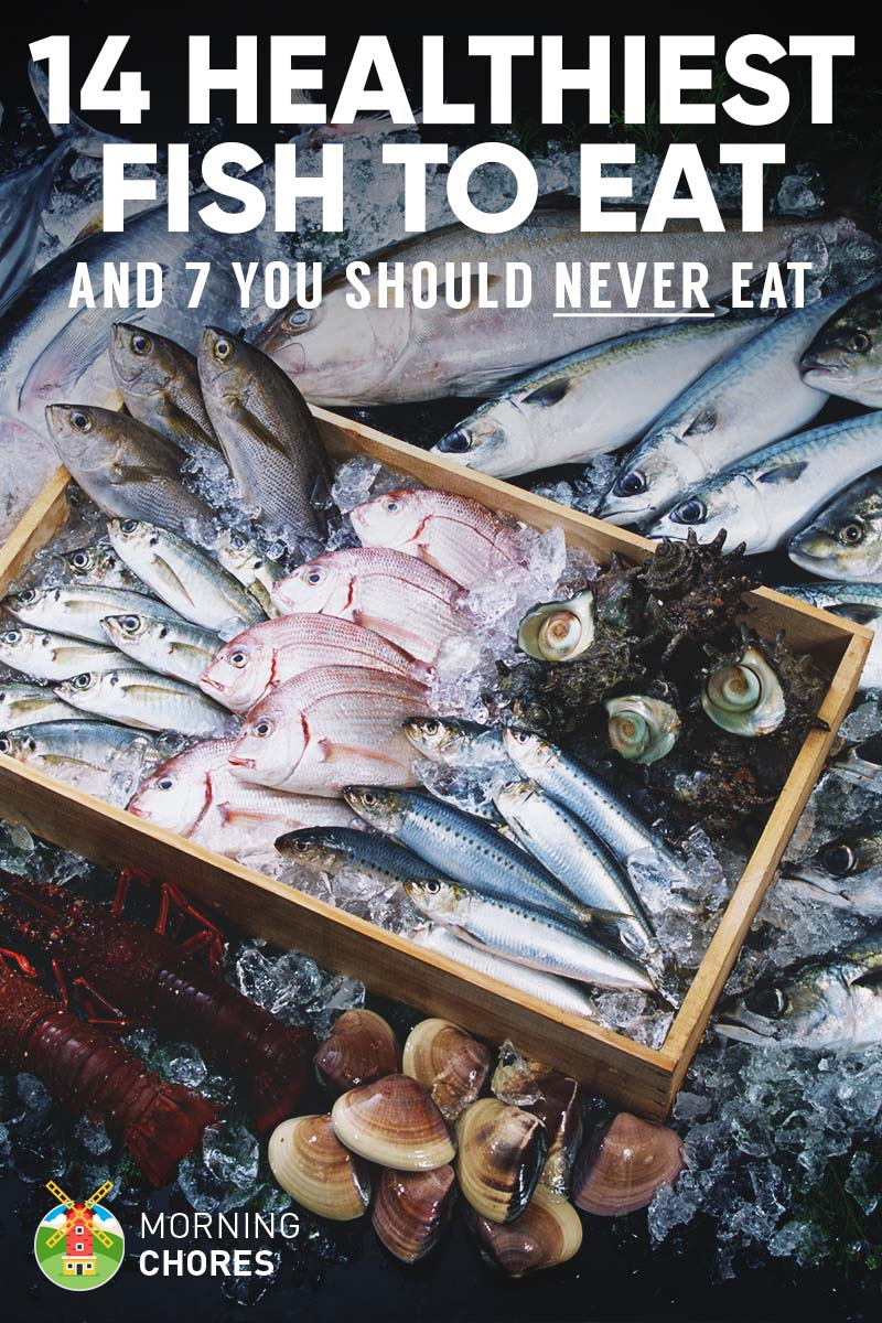 14 healthiest best fish to eat and 7 to absolutely for What is the best fish to eat