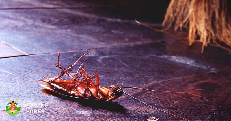 How To Get Rid Of Roaches From Your Home 7 Steps That Actually Work