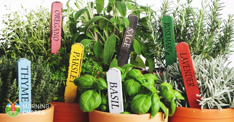 easy steps to growing herbs indoors and  herb garden inspiration, Beautiful flower