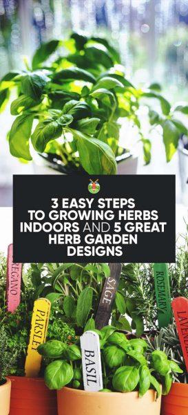 3 Easy Steps To Growing Herbs Indoors