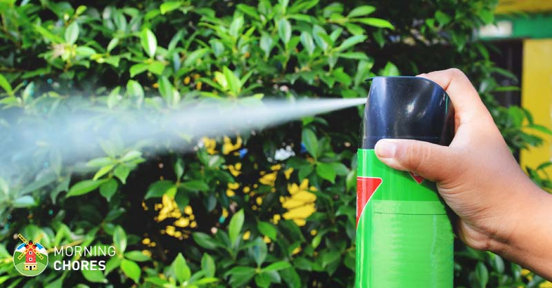5 Best Bug Spray Treatments For Indoor And Outdoor Home