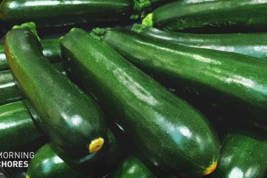 How to Freeze Zucchini and Keep Them Fresh in 5 Easy Steps