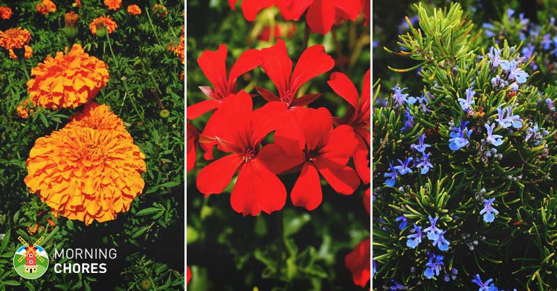 14 Mosquito Repelling Plants To Plant In Your Garden
