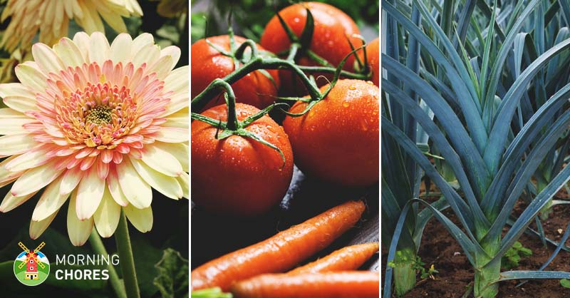 45-Best-Greenhouse-Plants-to-Make-the-Most-out-of-Your-Space-FB Caring House Plants on peaceful plants, detailed plants, balanced plants, learning plants, awesome plants, sharing plants, strong plants, tall slim plants, loving plants, protecting plants, respecting plants, tough plants, creative plants, resilient plants, talking plants, meaningful plants, england plants, positive energy plants, most important plants, friendly plants,