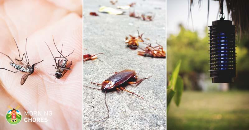 5 Best Ultrasonic Pest Repeller Reviews for Powerful Pest