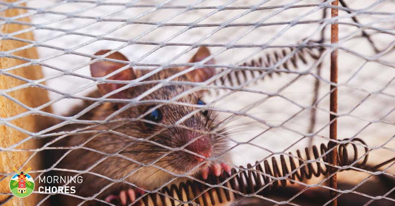 7 Best Mouse Trap Reviews for Indoor and Outdoor Rodent