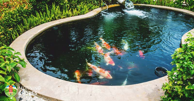 8 big reasons to build backyard ponds to improve your home for How to make koi pond water clear