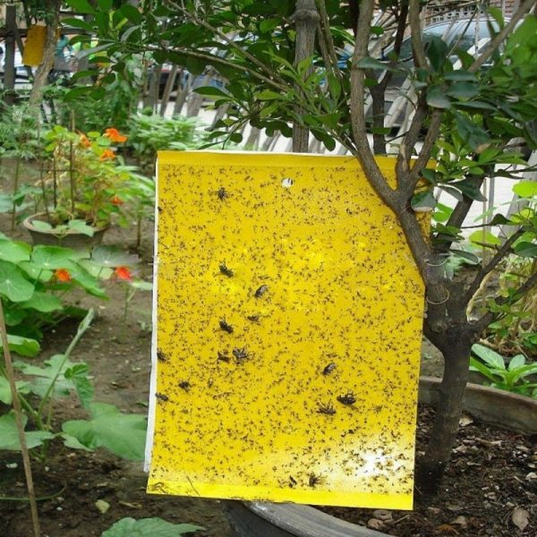High Effect Double-Sided Insect Yellow Sticky Traps