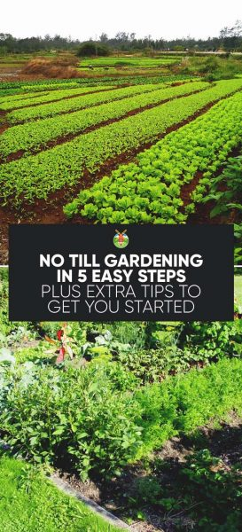 Here is what you need to know about no-till gardening: