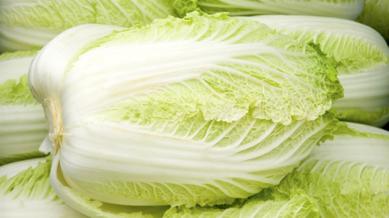 chinese cabbage vegetables that grow in shade