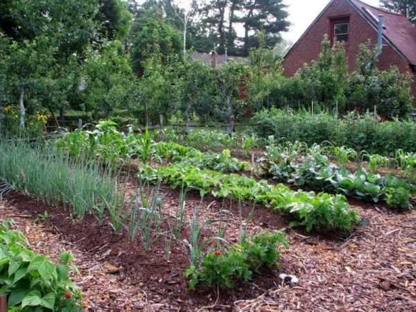 What Is No-Till Gardening?