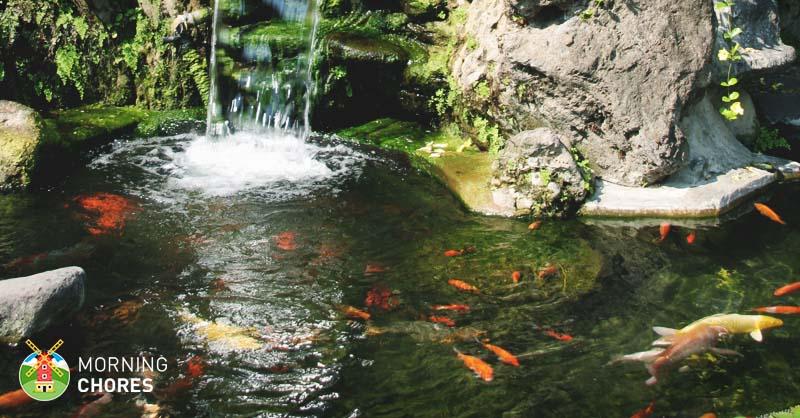 5 best pond skimmer reviews for a complete pond filtration for Best fish pond filter