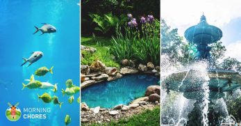 5 Best Pond Vacuum Reviews: Powerful Cleaners for Home Water