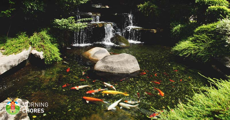 6 best pond pumps high quality pond fountain and for Water filtering plants for ponds