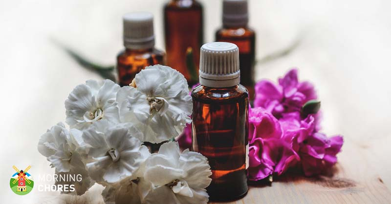 How to Make Essential Oils: 2 Ancient Methods That Work