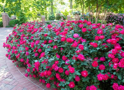 When To Trim Your Bushes And 6 Important Tips To Do It Right