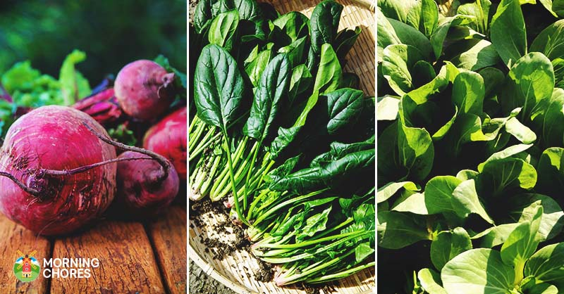 16 Fast Growing Vegetables That Will Give You A Harvest Quickly