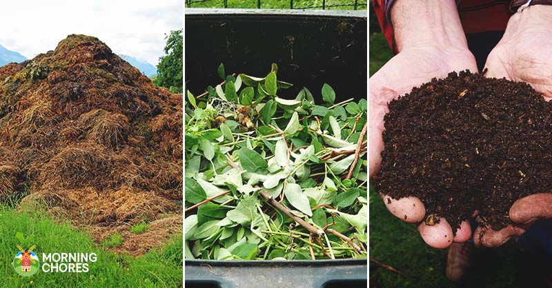 Advantages Of Adding Coffee Grounds To Compost