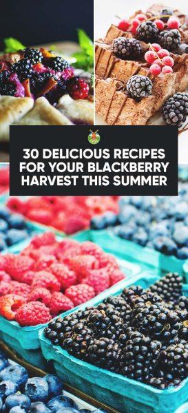 blackberry recipes intro card