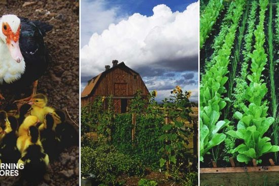 4 Steps to Starting a Hobby Farm and Advice You'll Be Glad to Have