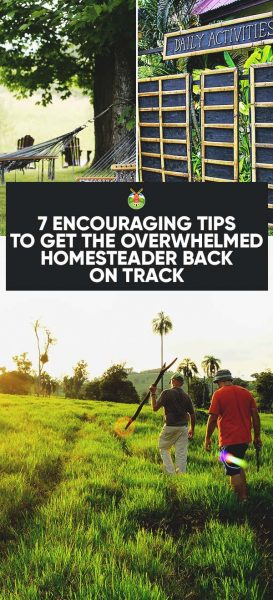 7 Encouraging Tips To Get the Overwhelmed Homesteader Back on