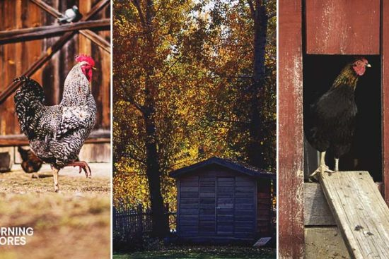 How We Built Our Charming Log Cabin Coop in 11 Steps With Only $100