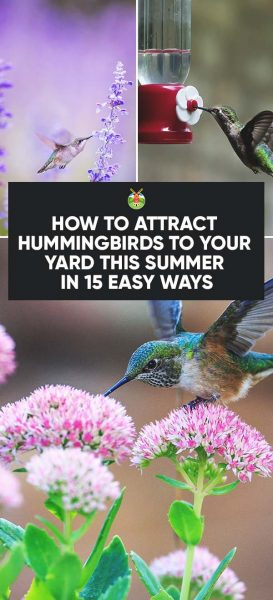 How To Attract Hummingbirds To Your Yard This Summer In 15 Easy