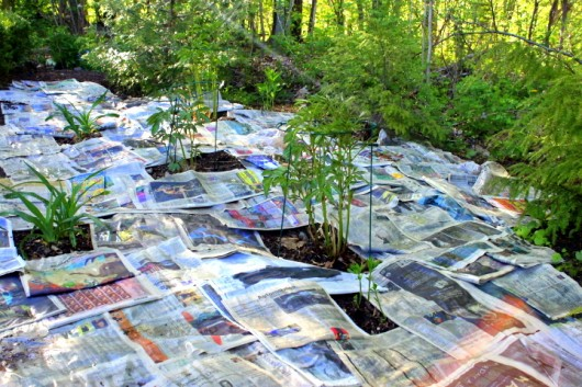 newspaper flower bed
