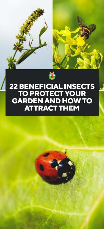 22 Beneficial Insects To Protect Your Garden And How To Attract Them