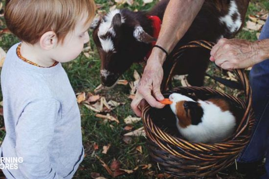 5 Great Reasons We Homeschool on the Homestead and 5 Ways How We Do It