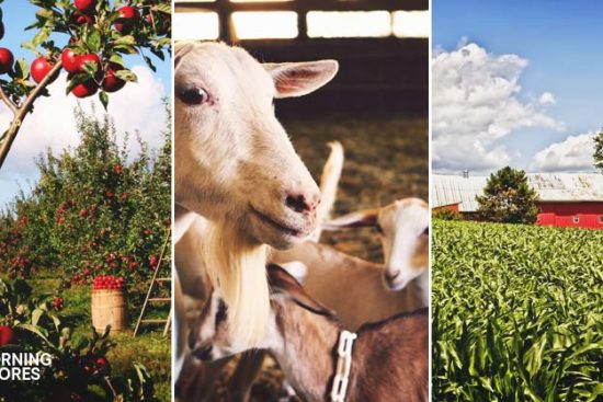 14 Important Ideas About What Every Homestead Needs and Must Implement