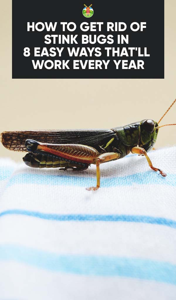 how to get rid of stink bugs in 8 easy ways thatll work every year pin. Black Bedroom Furniture Sets. Home Design Ideas