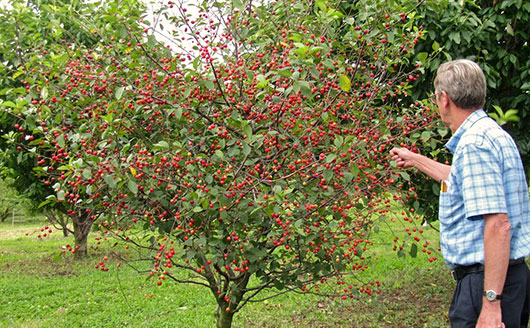 Fruit trees, once established, are hard to kill plants