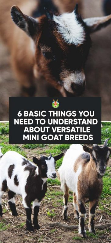 6 Things You Need to Understand About Versatile Miniature