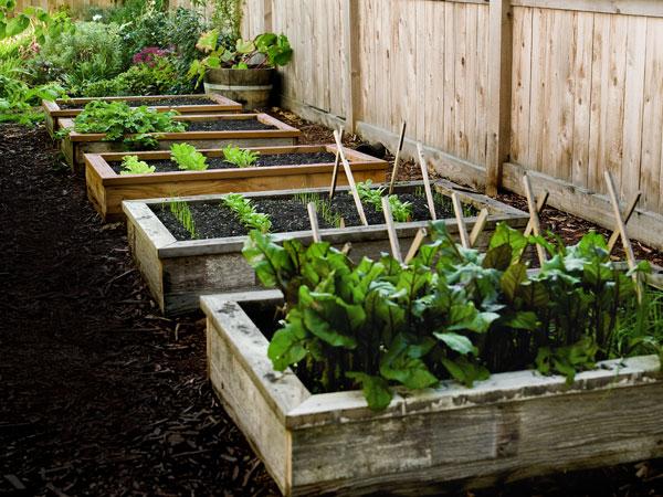 Home Garden Raised Beds 62