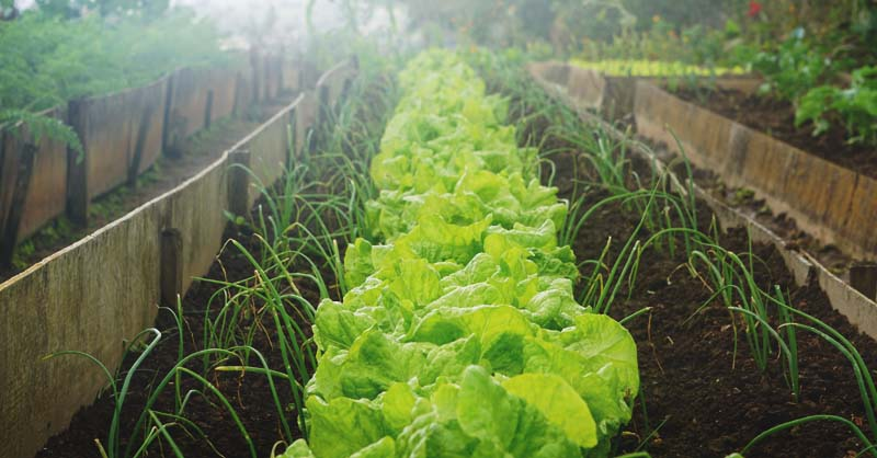 Vegetable Garden Idea MorningChores