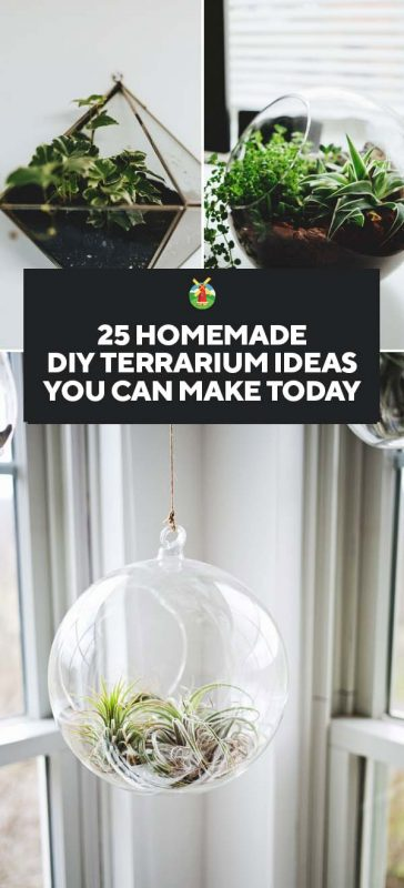 25 Inspiring Homemade Diy Terrarium Ideas You Can Make Today