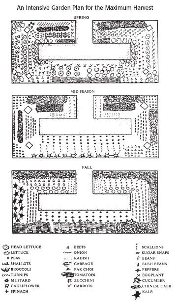 19 Vegetable Garden Plans Layout Ideas That Will Inspire You