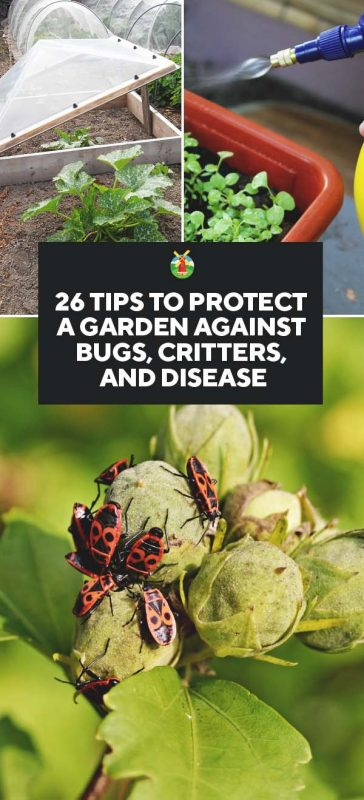 26 Tips To Protect Your Garden Against Bugs Critters And Disease