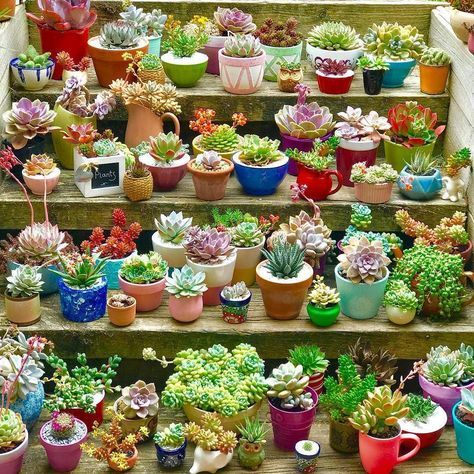 succulent container ideas