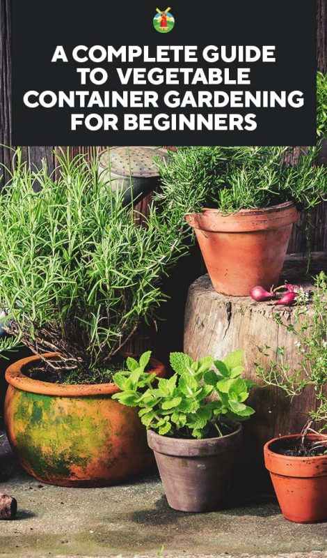 But There Are Things You Need To Understand When Deciding Container Garden Here Is What Know Grow A Successfully