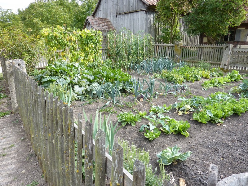 set up your vegetable garden