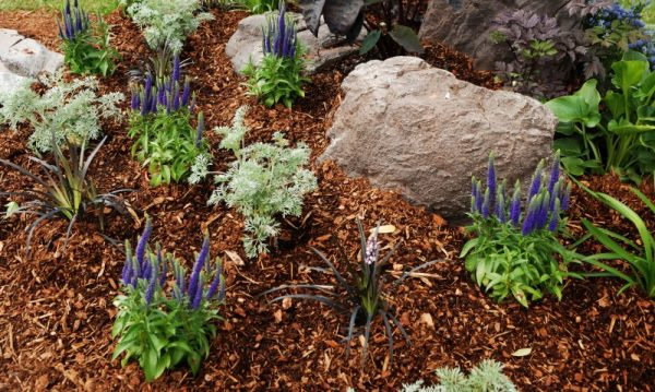 mulch is important for vegetable garden care